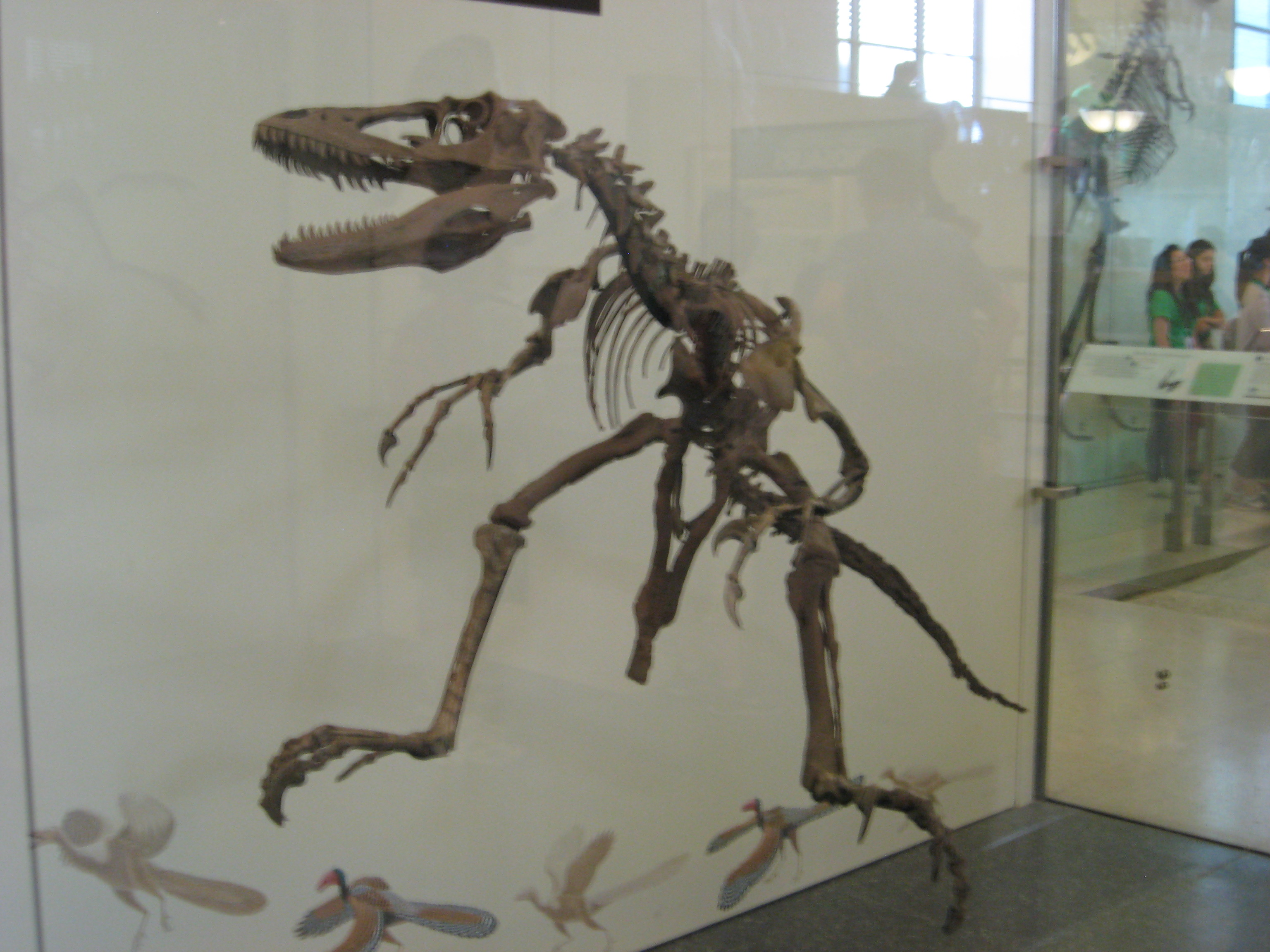 Green tea and velociraptors it s just a flesh wound - The Type Specimen Of Velociraptor Found In Mongolia During One Of The Amnh Expeditions To The Gobi Desert In 1923